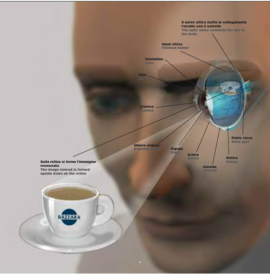 Caratteristiche sensoriali nella tazzina di caffè